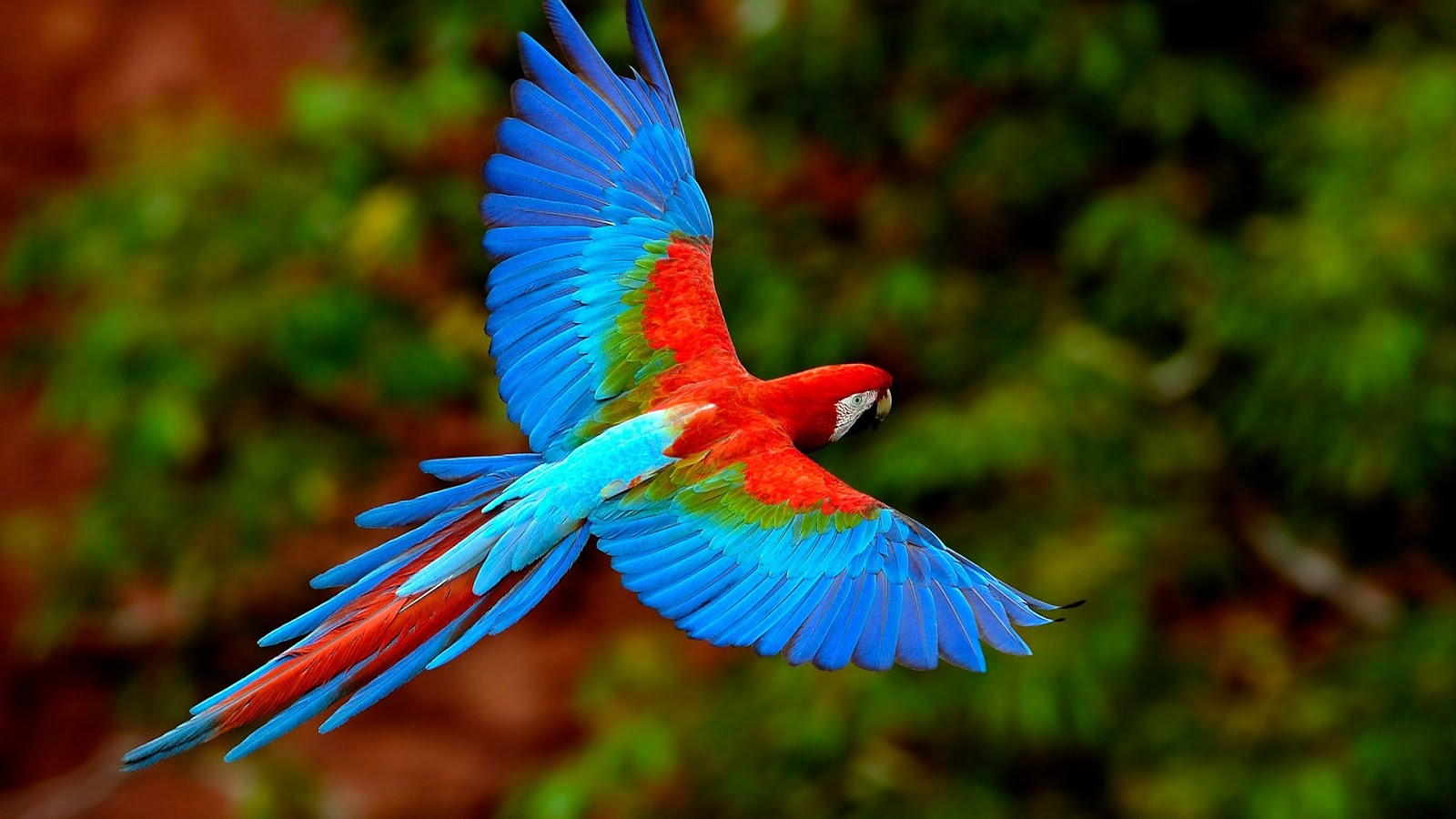 Flying Birds Wallpapers - Entertainment Only