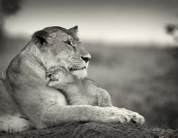Hermosas Fotos de Cachorritos y Sus Madres