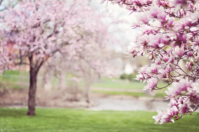 primavera-estação-flores