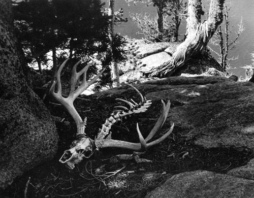 masters of photography : Minor White : photo of deer scull