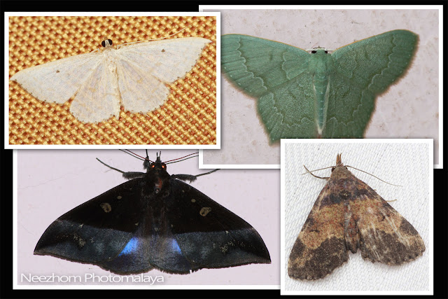 Moth wings patterns collection