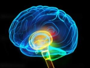 Pengertian Otak