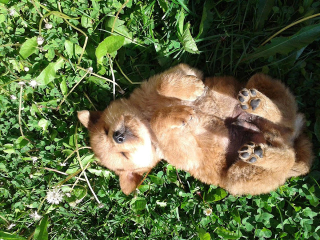 cute sleeping puppies, cute puppy sleeps in adorable position