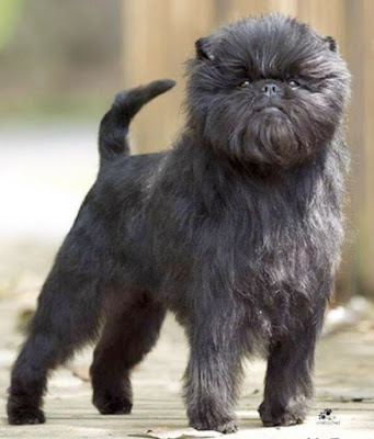 Clone dog