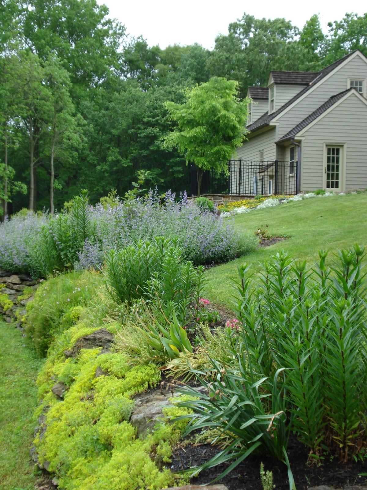 Maffei Landscape Design LLC