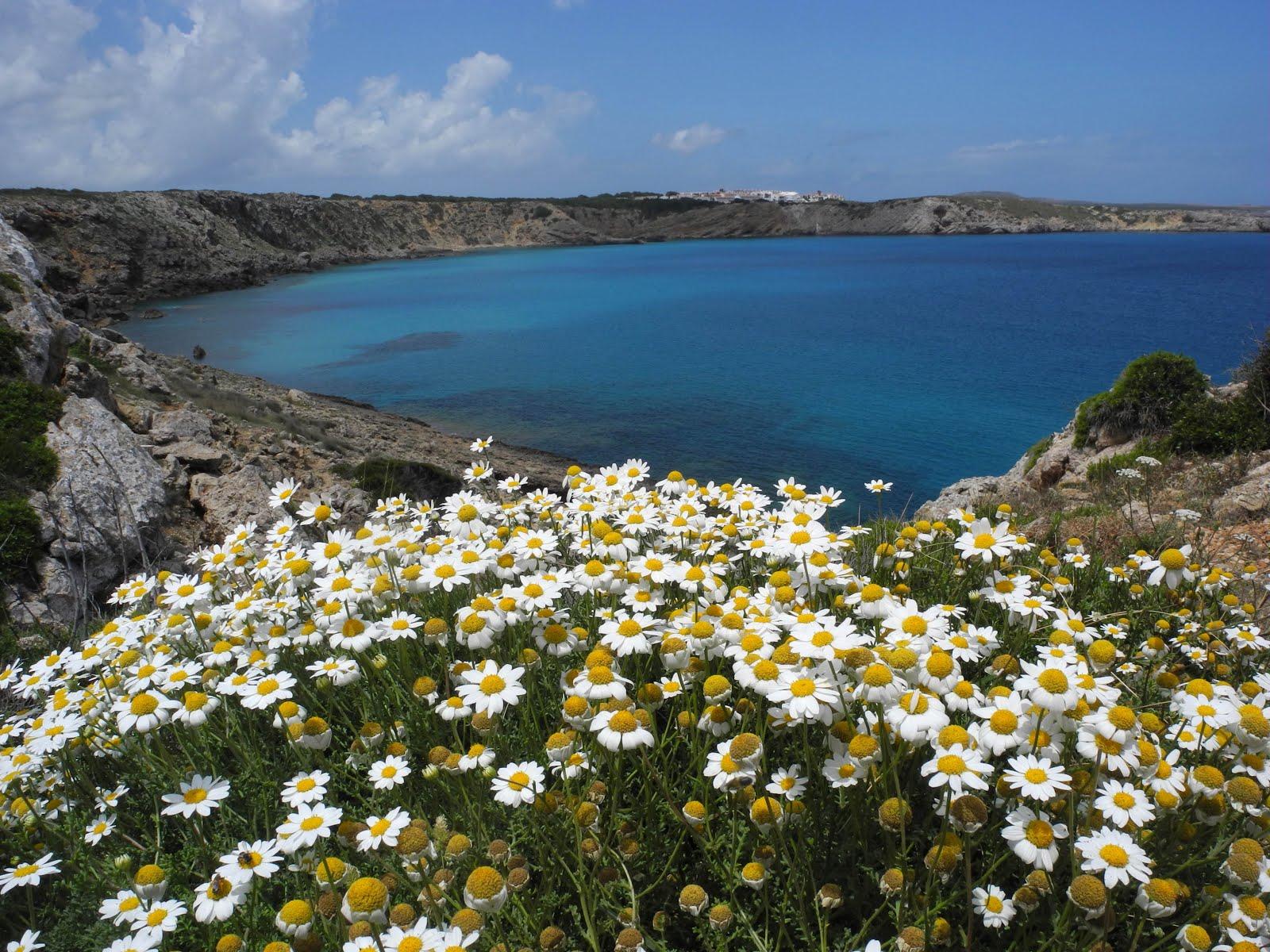 CAMÍ DE CAVALLS (Menorca) Sector nord