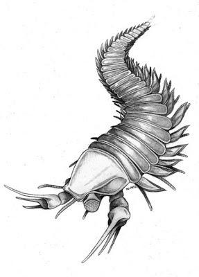 Kooteninchela