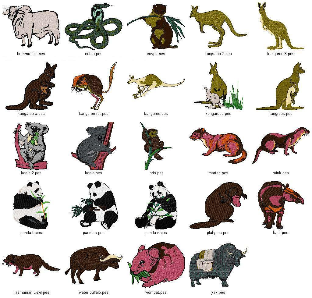 african rainforest animals list