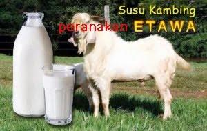 jual susu kambing