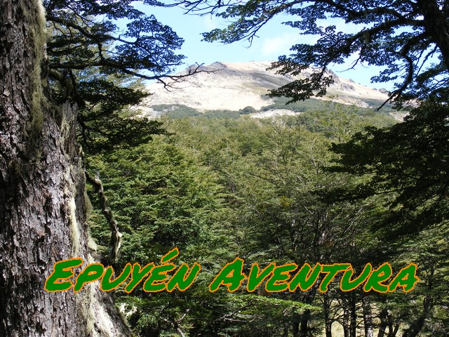 Bosque andinopatagonico - Patagonia Andina