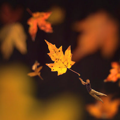 how to photograph fall foliage