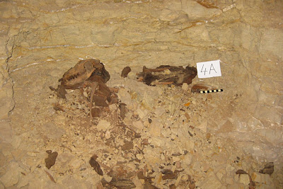 Eight million dog mummies found in Saqqara