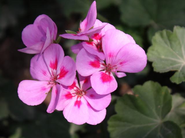 Fotos de Orquideas Rosas y Tulipanes Altisima definicion  - Imagenes Con Flores Naturales