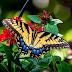 Mariposa Amarilla y Flores Rojas