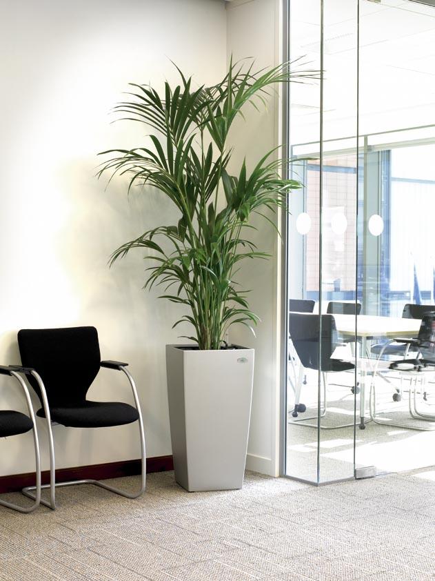 indoor plants in office enviroment exterior design