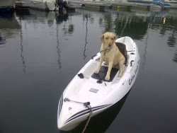 Buttercup on the Kayak!