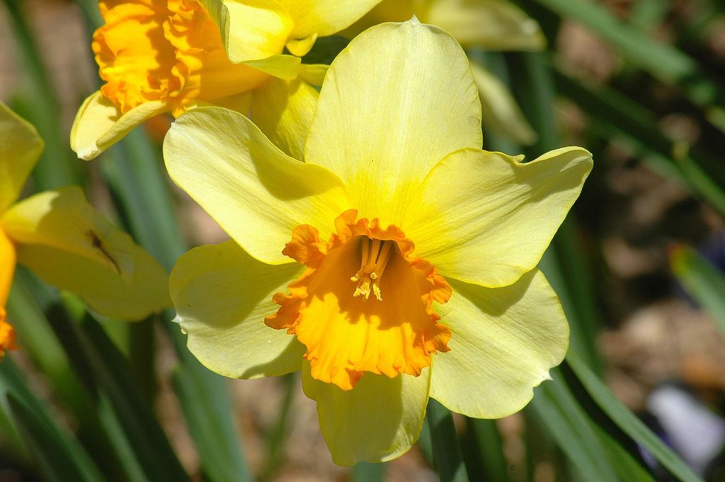 Любом празднике создадут желтые цветы