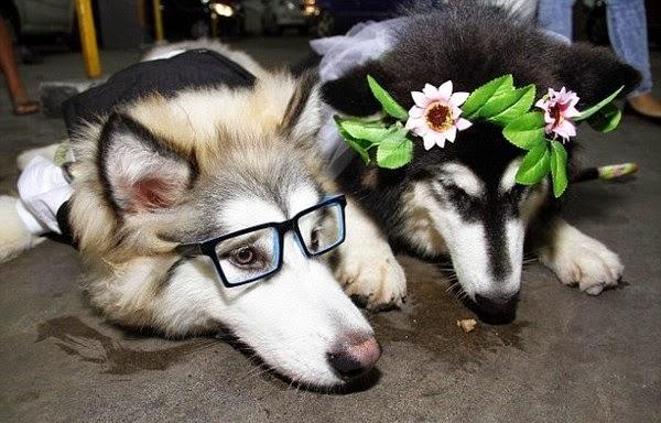 Yipa đội một chiếc vòng hoa trên đầu còn Buls đeo chiếc kính khá ngầu