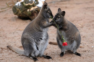 Hài hước hình ảnh các con vật hôn nhau