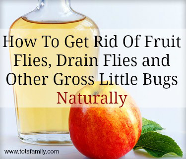 get rid of fruit flies are fruit yogurts healthy