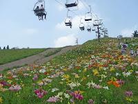 冬はスキーで知られるびわこ箱館山にゆり園が開園しことしで4年目