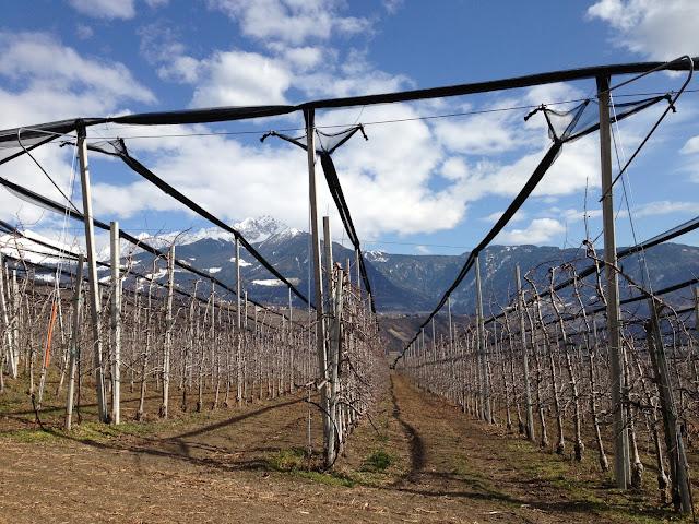 Pittoreske Südtiroler Monokultur