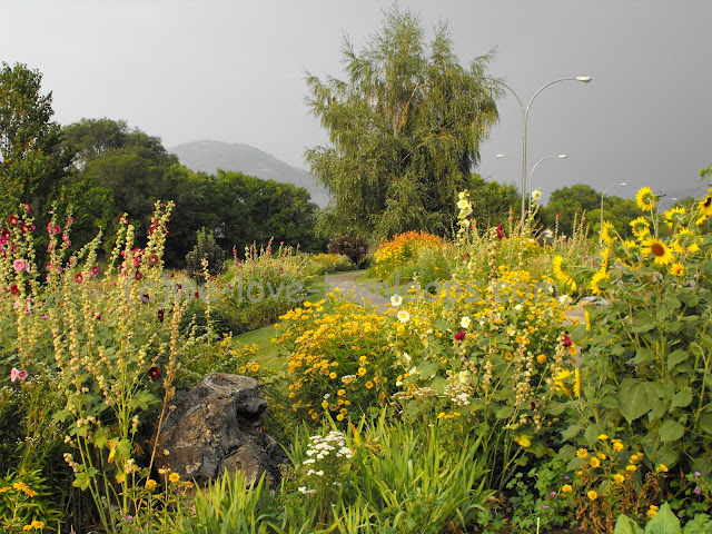 Full gardens of flowers in the Gregson Butterfly Garden