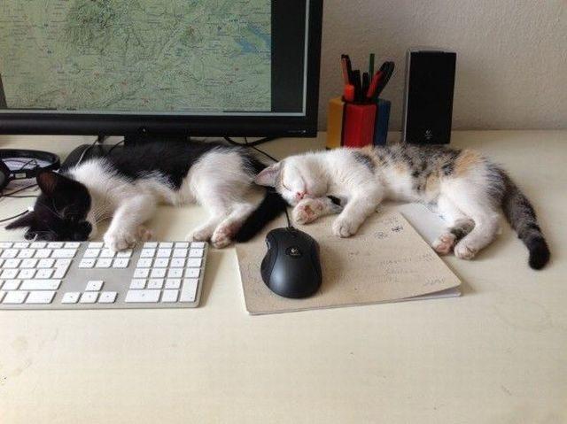 Синхронные коты фото 2