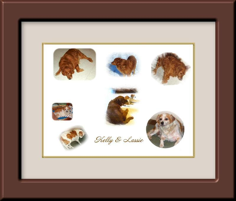 FRAMEWORX Custom Picture Framing: Celebrate National Frame Your Pet ...