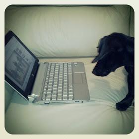 Blog Experience Lola