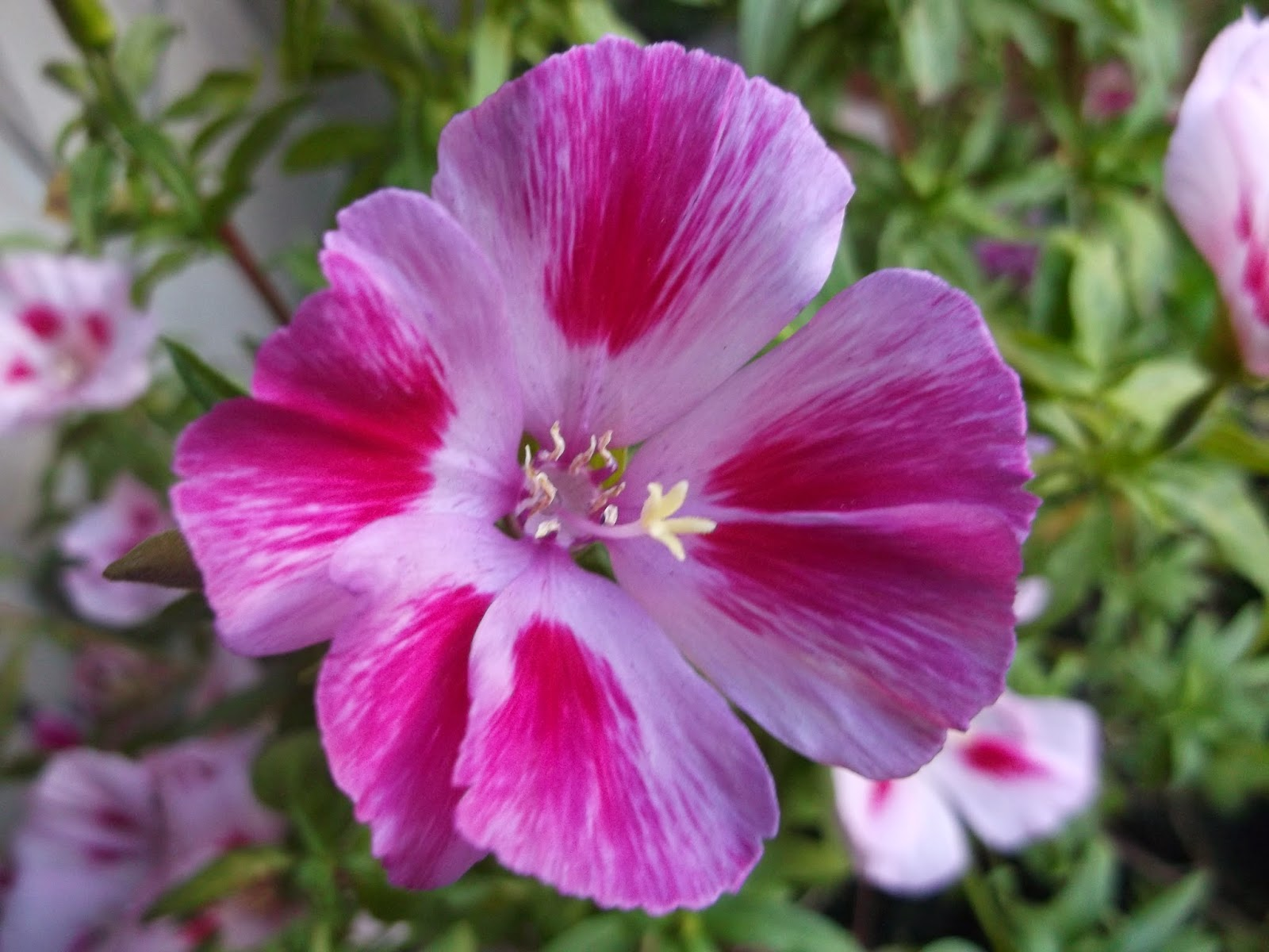 крупные цветы из фоамирана мастер класс с пошаговым фото