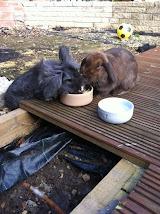 Lopsy & Lulu