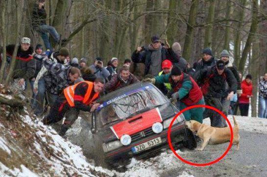 Araba Çeken Köpek
