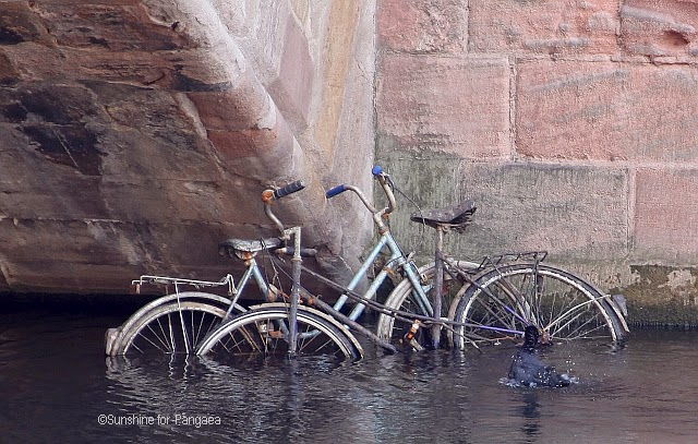 Bicycle and coot in a river
