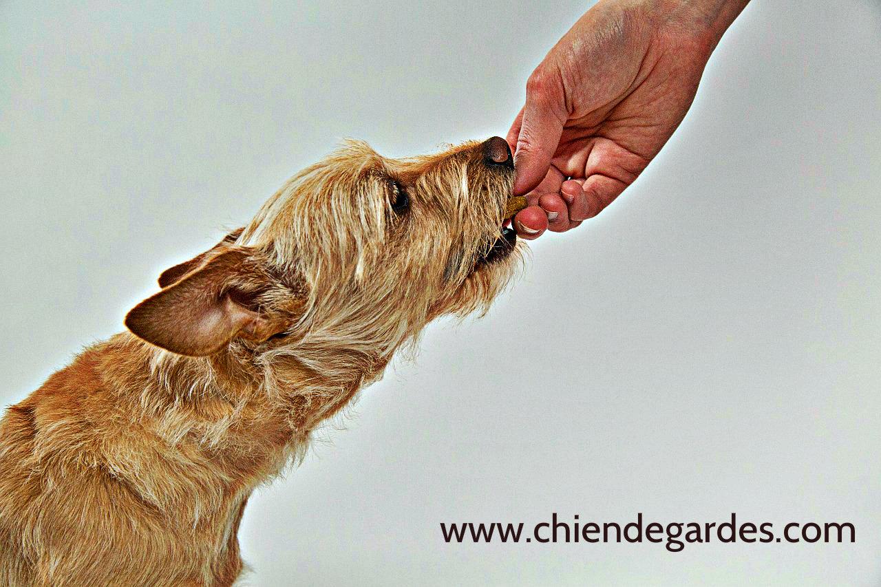 6 conseils Qui peut rendre votre chien un chien de garde