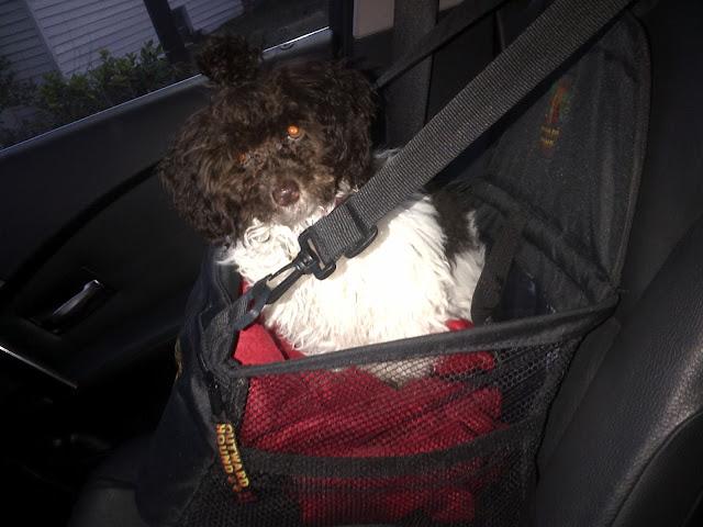 Toy Dog Car Seats
