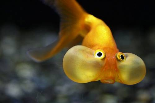 Extremamente Peixe de água salgada vive em água doce? | CIÊNCIAS - PROF. EMILIANE UH73
