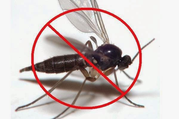 Natural Gnat Repellent: Get Rid of Gnats with Home Remedies