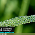 Download Tema Wild Grass Windows 8