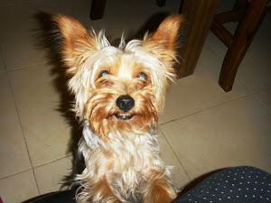 Este mi perrito Pinki, siempre está a mi lado.