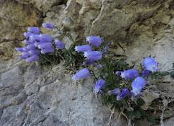 Alps Photogallery