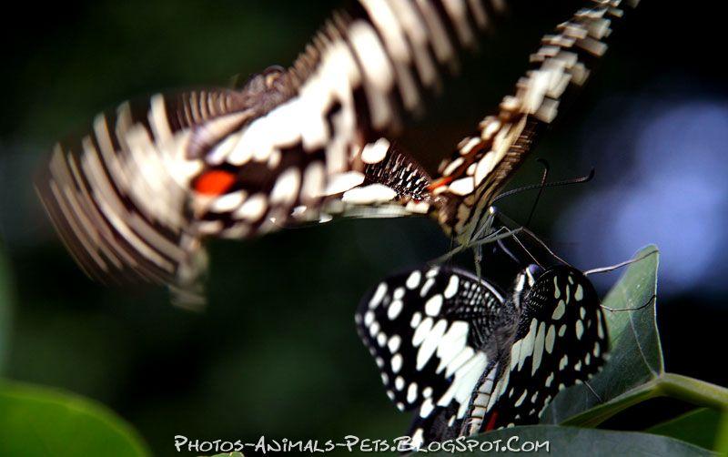 http://4.bp.blogspot.com/-gd4ROVqdB2E/TtsyfSWhkjI/AAAAAAAACVg/GV557iwZ7VI/s1600/butterfly%2B.jpg