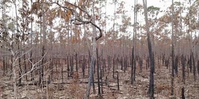 Incendio en bosques de Abaco4