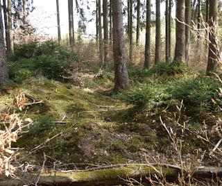 Bild 3: Grabhügel im Forstenrieder Park