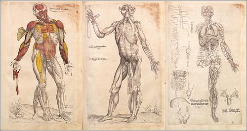 Aprende anatomía : Anatomía en el Renacimiento