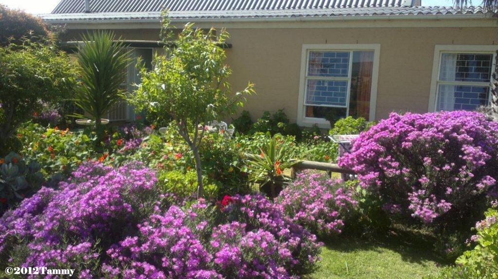 Tammy's South African garden