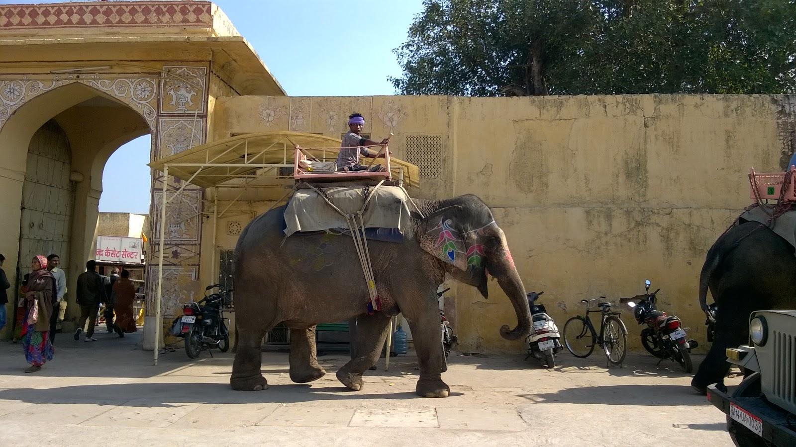Jaipur Elephant, Rajasthan, India