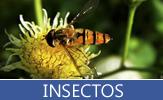 Extensa variedad de fotos de insectos en efecto macro como son abejas, arañas, gusanos, mariposas, hormigas, etc. - Insects