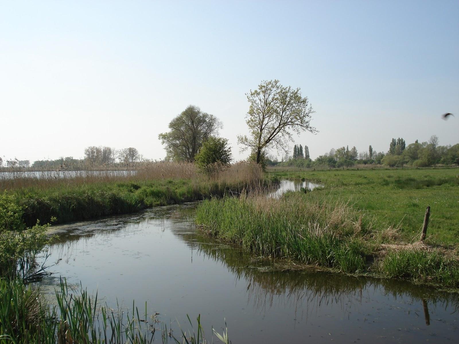 het natuurgebied de Blankaart in Woumen