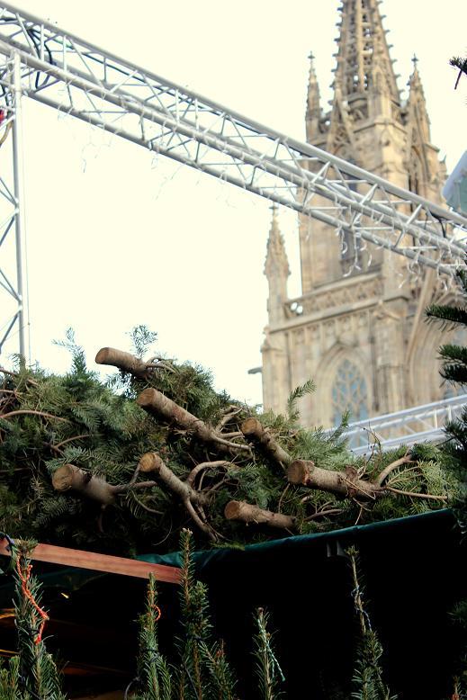 barcelona cathedral on christmas